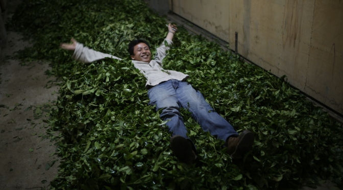 A Connoisseur's Guide to Chinese Tea