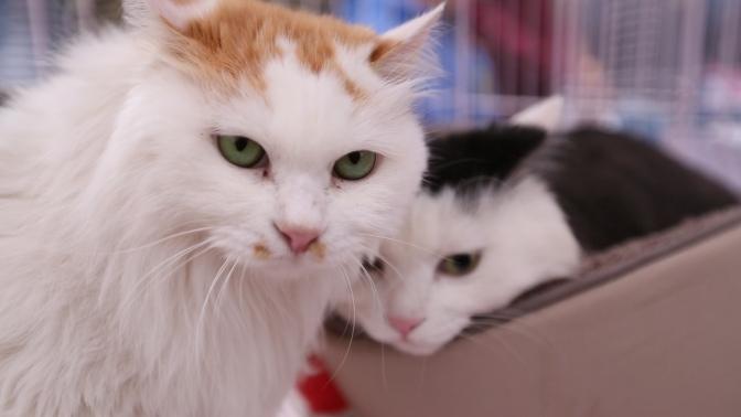 Saving Beijing's Street Cats
