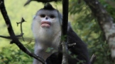 china-icons-monkey-cut-7-00_00_09_14-still007