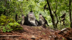 china-icons-monkey-cut-7-00_01_02_16-still010