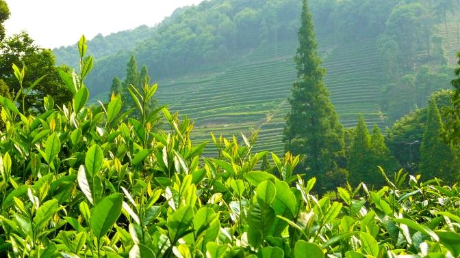 International Tea Day: A Celebration of Tea from China