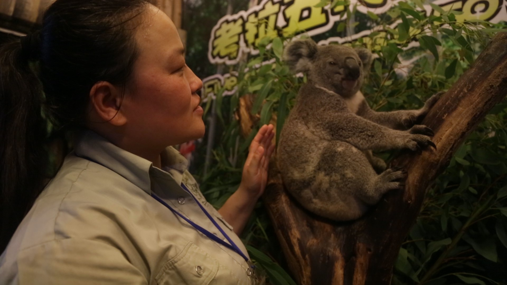 Koalas6
